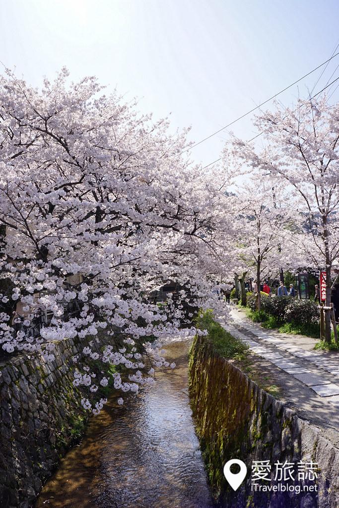 京都赏樱景点 哲学之道 29