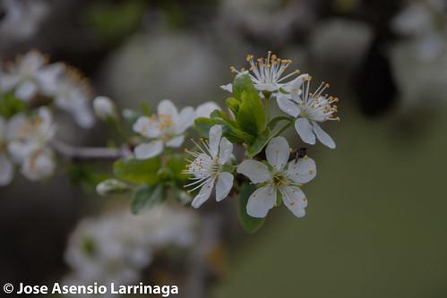Primavera 2015 #DePaseoConLarri #Flickr -013