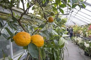 Smith College: Botanic Garden