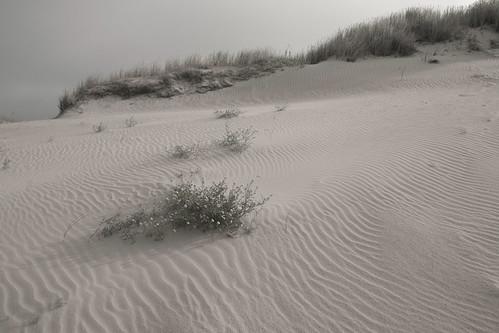 morning summer color landscape sand mood moody wind dunes lithuania lietuva curonianspit softgreen kuršiųnerija colorsofthewind kuršiųnerijanationalpark thedeaddunes