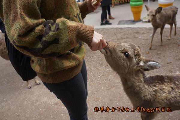 日本奈良公園東大寺17