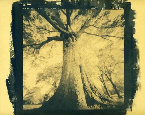 Tea-Toned Cyanotype Tree