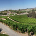 Temecula Wineries Panorama 4
