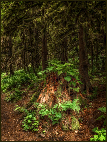 ca canada forest moss britishcolumbia ferns forestfloor treestump martinsmith cultuslake teapothill fernsandforest nikkor2485mmf3545gedvr nikond750 ©martinsmith