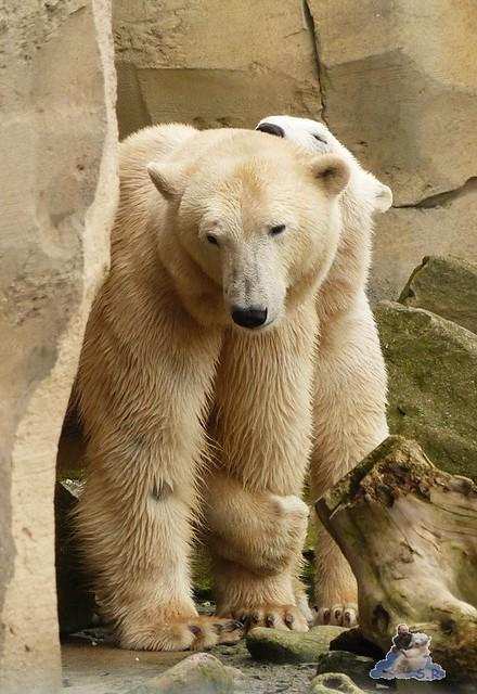 Zoo am Meer 07.03.2015   197