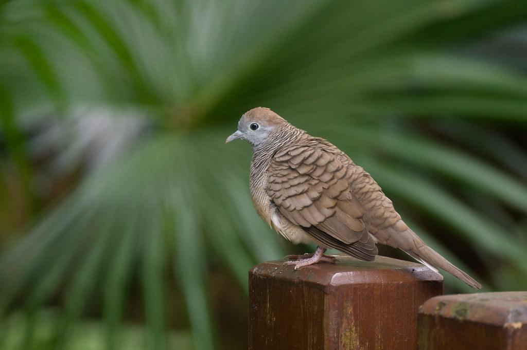 香港公園觀鳥趣