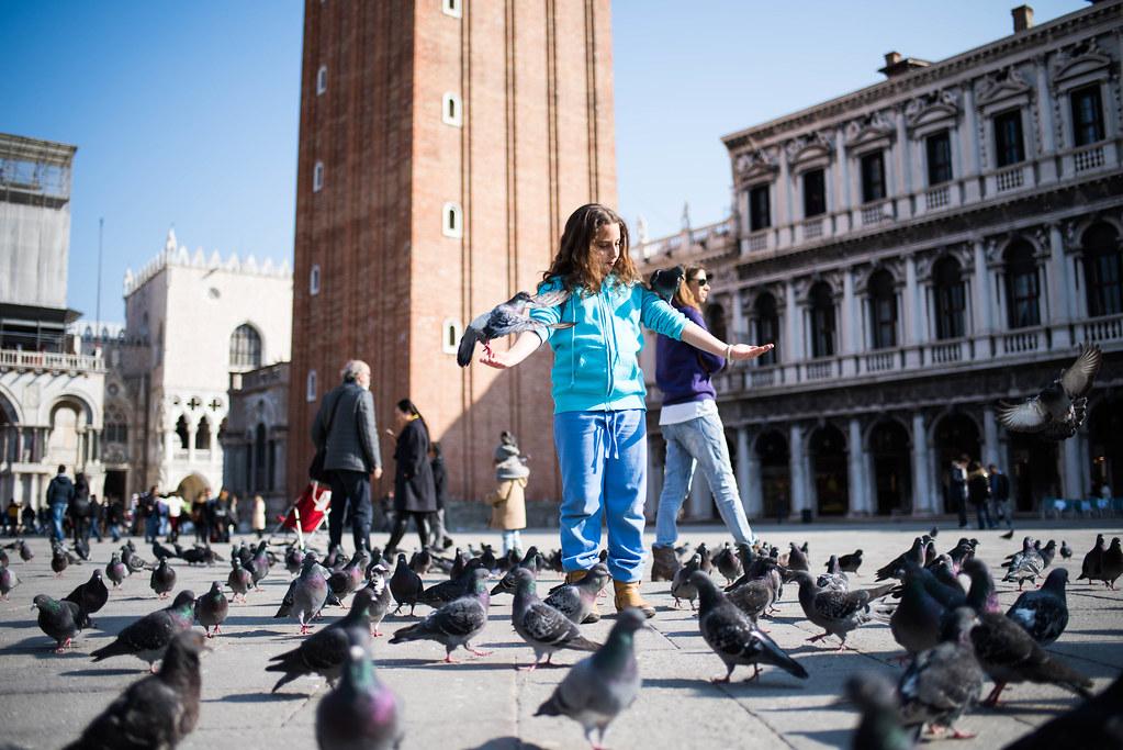 The Queen of Pigeons