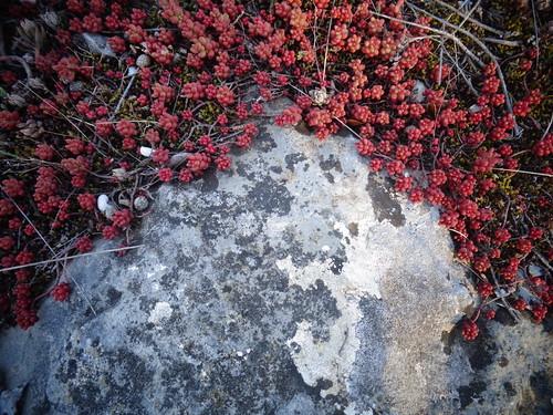 "Style afro ""mini plantes grasses rouges""..."