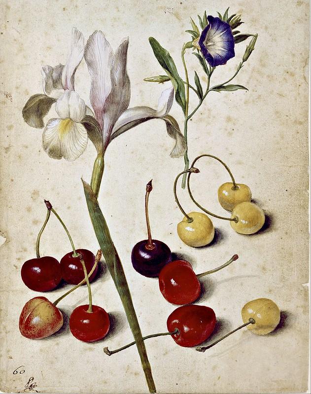 Georg Flegel - Spanish iris, morning glory, and cherries (1630)