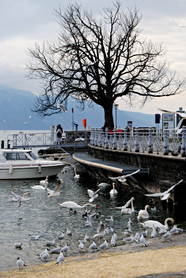 Go Travel_Vevey, Swiss Riviera (2)