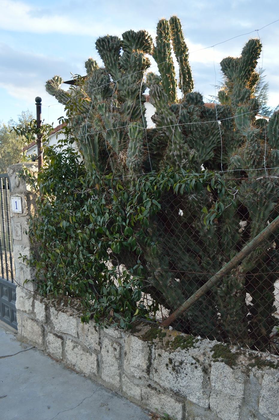 lara-vazquez-mad-lula-style-cactus
