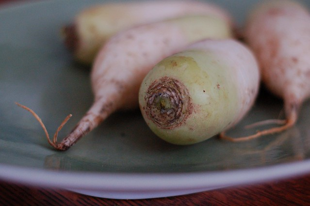 Daikon radishes by Eve Fox, The Garden of Eating, copyright 2015