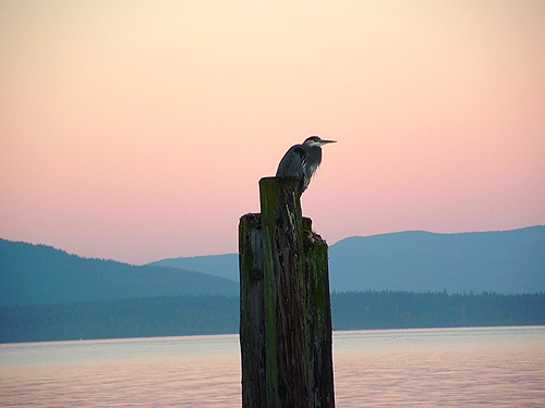 heron.islands.pole