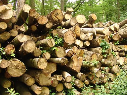 Energieholz heimischer Wald #holzvonhier-Energie