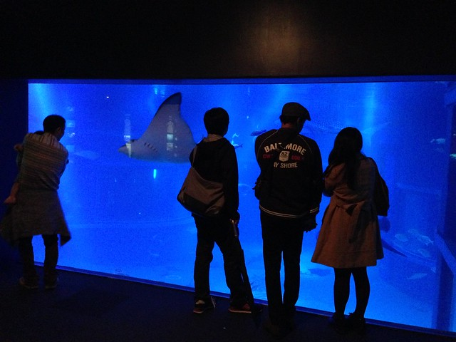 Admiring the Pacific Ocean tank