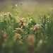 Spring Medley by Tammy Schild