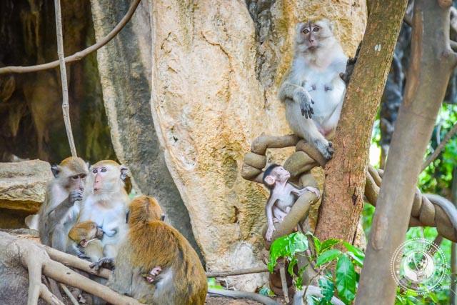 Wild Monkeys in Railay Thailand