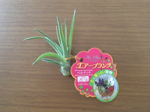 AirPlants (1)
