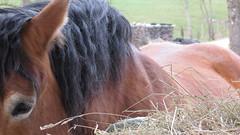 nose(0.0), colt(0.0), rein(0.0), halter(0.0), foal(0.0), animal(1.0), mane(1.0), mare(1.0), stallion(1.0), mammal(1.0), horse(1.0), mustang horse(1.0), pasture(1.0), pony(1.0),