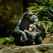 Amy Chimpanzee, with her son Gus by Zoo Much Information