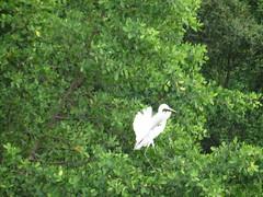 Magnifique échassier blanc
