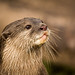 Otter by PG_Pix
