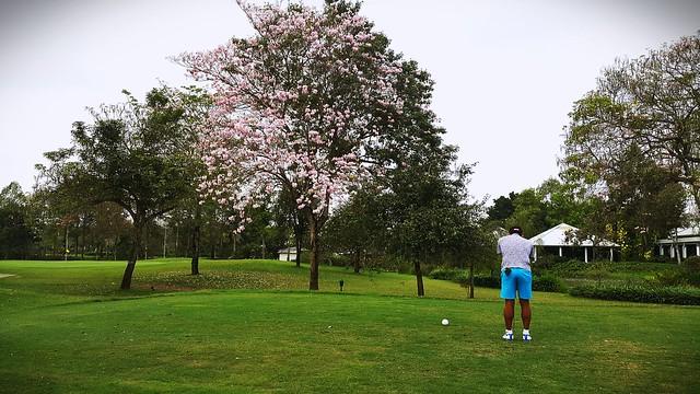 Thai Sakura...