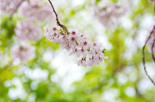 お花見@篠崎公園