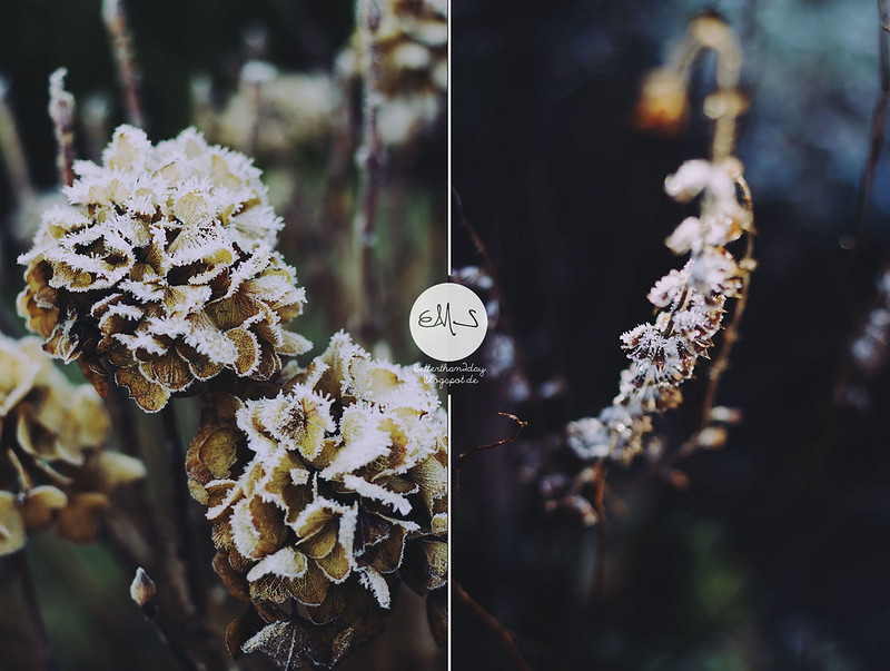 winterspirit (38) Kopie-horz Kopie
