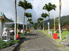 Palm-lined roadway into Manoa Chinese Cemetery