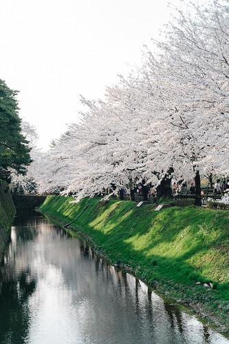 trip classic film japan lens spring raw fuji cherryblossom sakura fujifilm 40mm voightlander manualfocus nokton cmos xp1 ishikawaken fastlens apsc kanazawashi xpro1 vsco xtrans fujixpro1 fujifilmxpro1