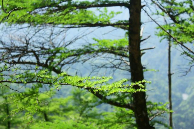 2014-05-24_00281_鍋割山.jpg