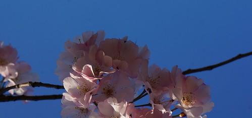 La pureza en la naturaleza: flores. purity in nature: flowers