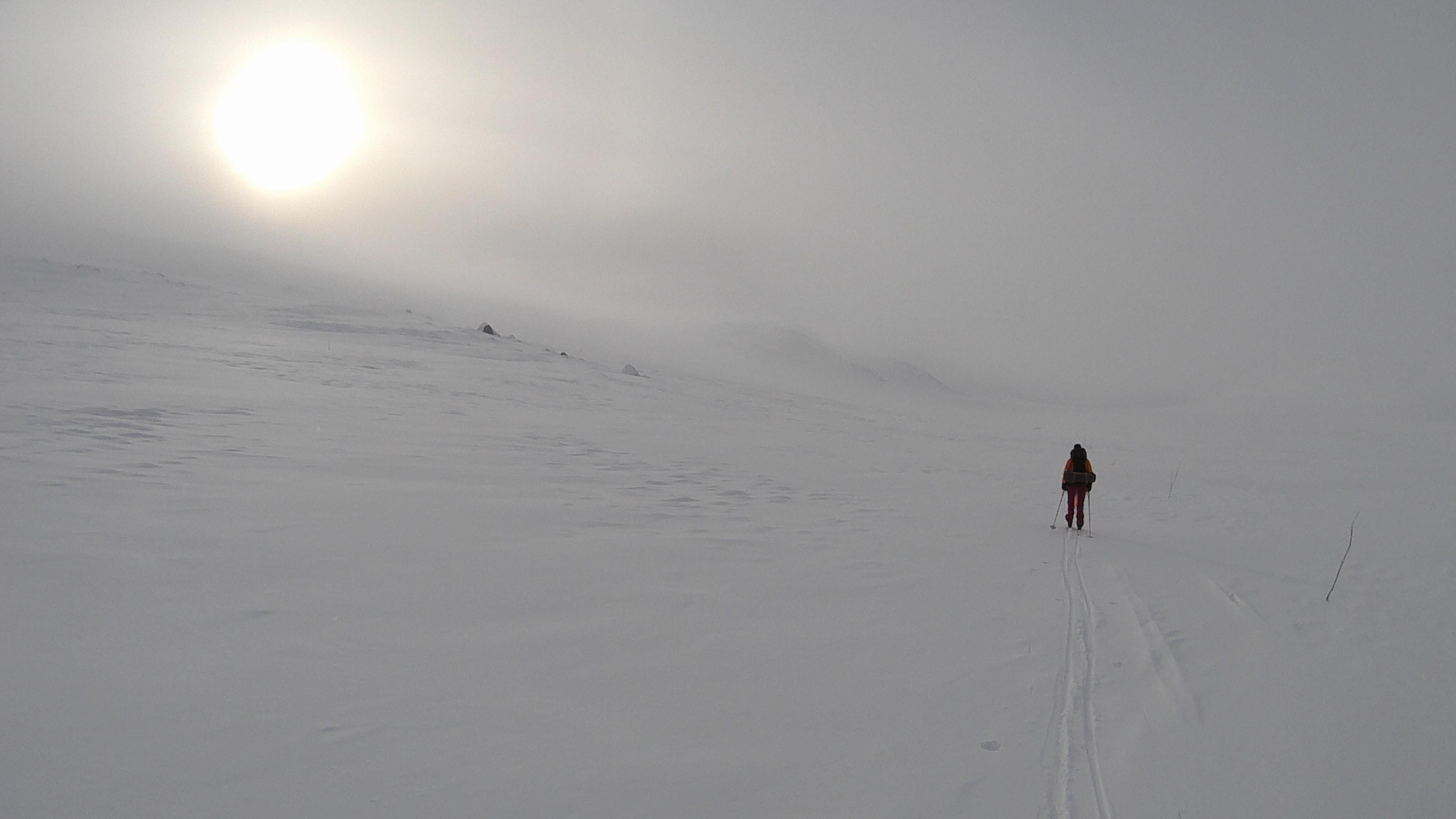 Skarvheimen 2015