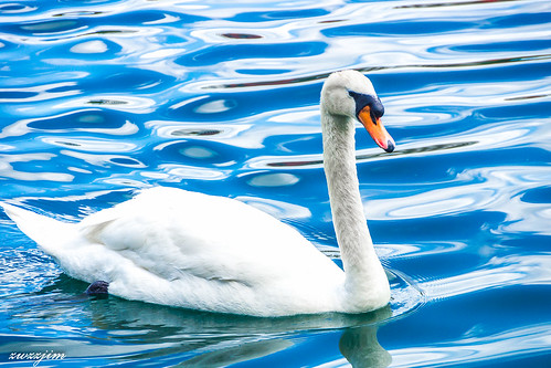lake orlando swan eola