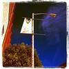 A #giraffe in #sanfrancisco