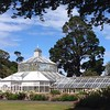 Glass house, Botanic Gardens, Dunedin, NZ, 1:00pm Tuesday March 10.