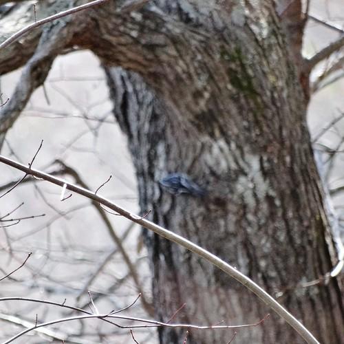 statepark bird spring rare warbler