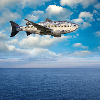 Flying Fish Airlines