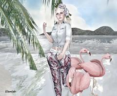 Elemiah - Aloha