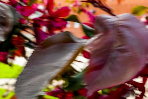 dof leaf