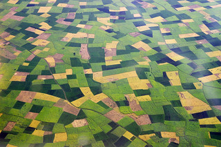 Fields, shapes and colours
