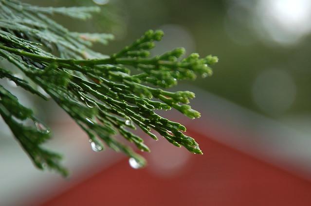 Rain Drops on Portland