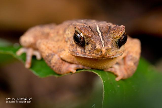Frog - DSC_5086