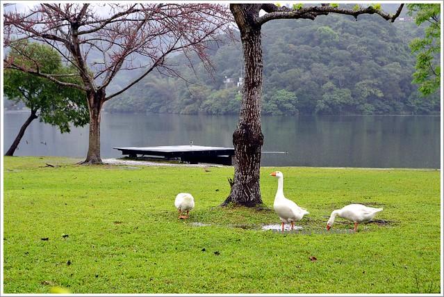 礁溪龍潭湖雨天漫步金礁溪礦泉水觀光工廠006-DSC_7736