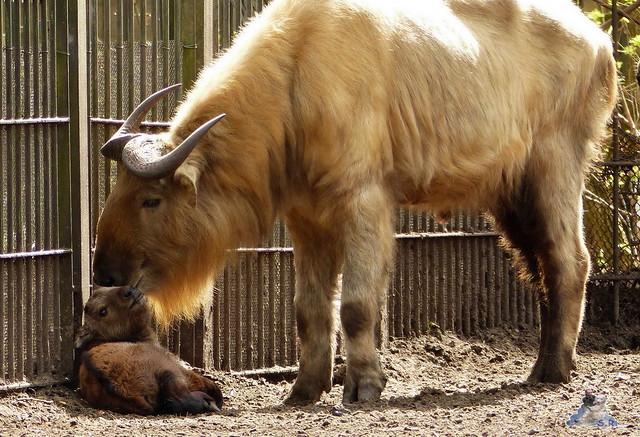 Tierpark Berlin 12.04.2015 135