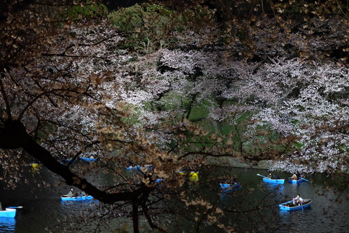 Sakura night moat 02