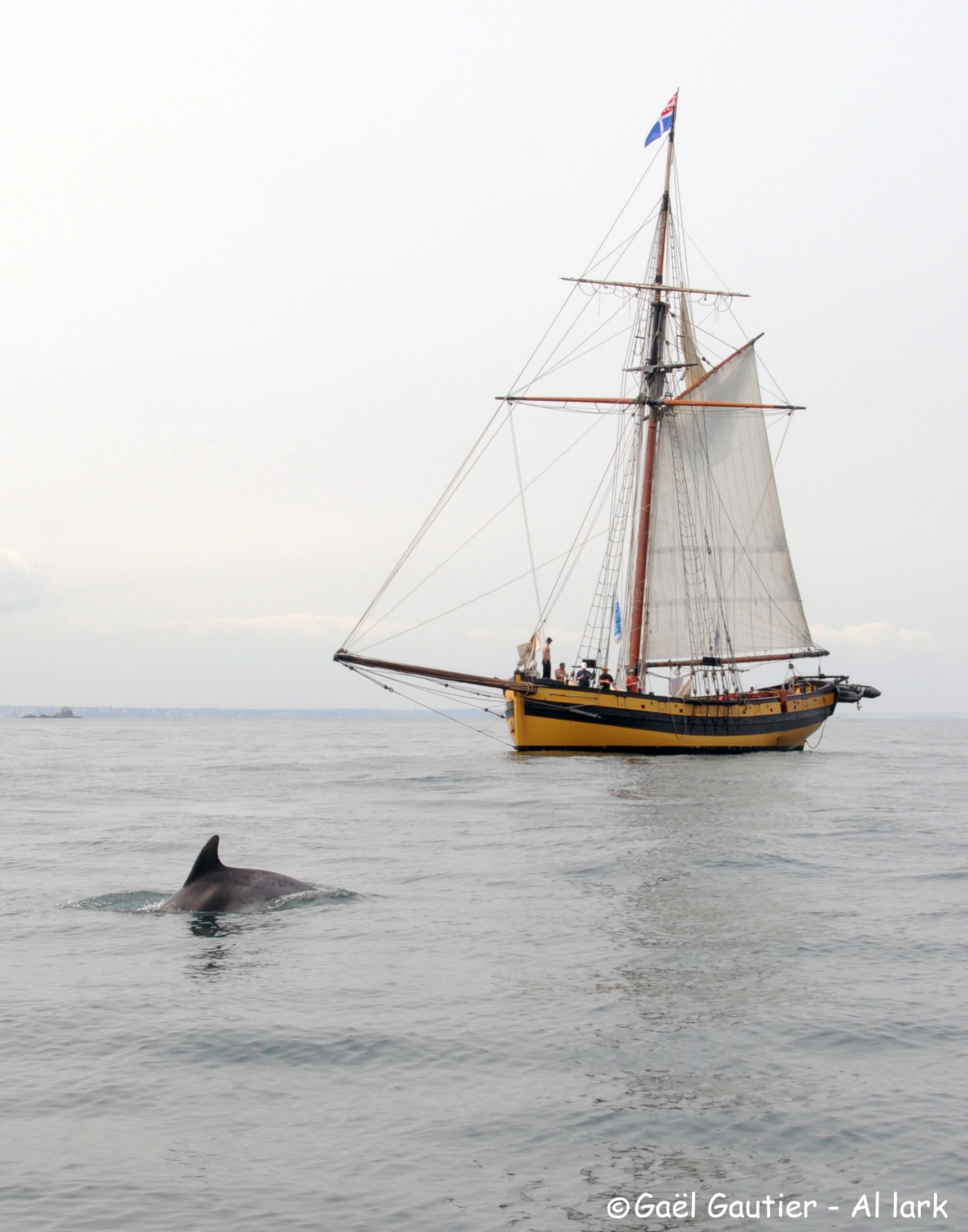 Le Renard et le dauphin