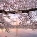 Cherishing the Cherries by Dwood Photography