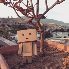 #Danbo watching the sunset from the rooftop overlooking the Madina. We decided to go back to our hostel before the sun down or else we will be in trouble finding it.  #travel diaries #Fes #Morocco
